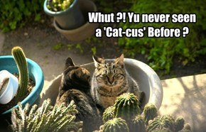 Whut ?! Yu never seen a 'Cat-cus' Before ?