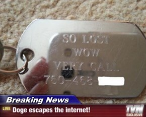 Breaking News - Doge escapes the internet!