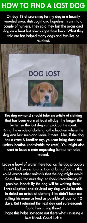 Public Service Announcement: How to Find a Lost Pet