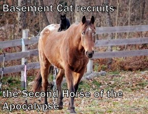 Basement Cat recruits  the Second Horse of the Apocalypse