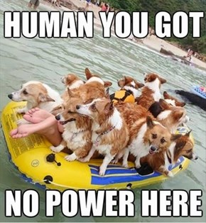 Imagine if They All Started to Doggie Paddle!