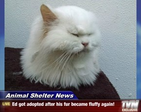 Animal Shelter News - Ed got adopted after his fur became fluffy again!