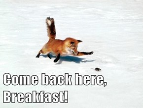 Come back here, Breakfast!