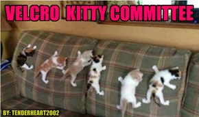 VELCRO  KITTY COMMITTEE
