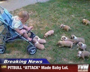 Breaking News - PITBULL *ATTACK* Made Baby LoL