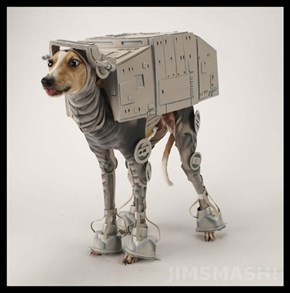 Keep Your Dog Warm In Those Frigid Hoth Winters
