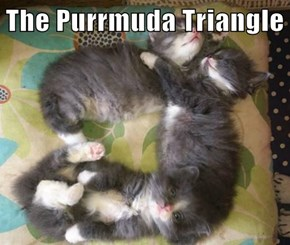 The Purrmuda Triangle