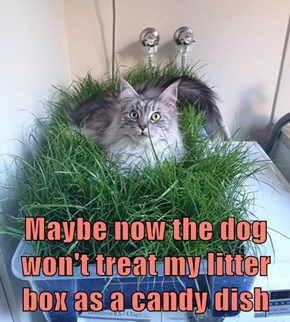Maybe now the dog won't treat my litter box as a candy dish