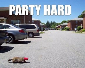 Now That's a Party Beaver