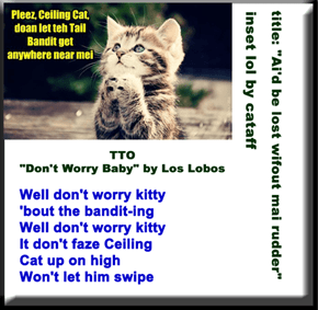 """Don't Worry Kitty"" (TTO ""Don't Worry Baby"" by Los Lobos)"