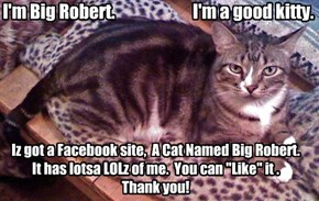 I'm Big Robert.                       I'm a good kitty.