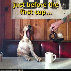just before the            first cup...