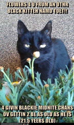FLOWERS 4 U FRUM AN OTHR BLACK KITTEH NAMD TOET!!  4 GIVIN BLACKIE MIDNITE CHANS OV GETTIN 2 BE AS OLD AS HE IS (21.5 YEERS OLD)