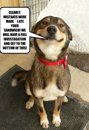 POLITICION DOGS