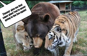 Timmy!  give me that super glue! You're never going to the Zoo again!