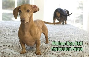 Weiner Dog Bed Protection Patrol