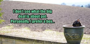 I don't see what the big deal is about pot. Personally, I prefer a box...
