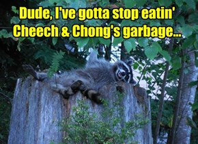 Raccoon Regrets, #420