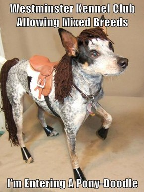 Westminster Kennel Club Allowing Mixed Breeds  I'm Entering A Pony-Doodle