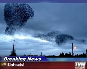 Breaking News - Bird-nado!