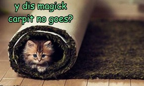 y dis magick carpit no goes?