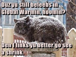Duz yu still beleebs in Global Warmin, hoomin?  Den I finks yu better go see a shrink.