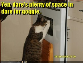 Yep, dare's plenty of space in dare for goggie..