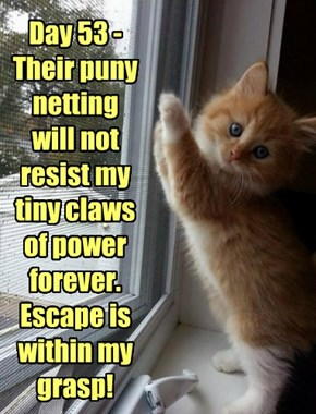 Day 53 - Their puny netting will not resist my tiny claws of power forever. Escape is within my grasp!