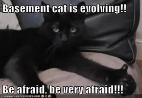 Basement cat is evolving!!  Be afraid, be very afraid!!!