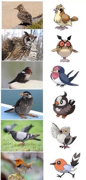 Pokémon and the IRL Birds They Are Based
