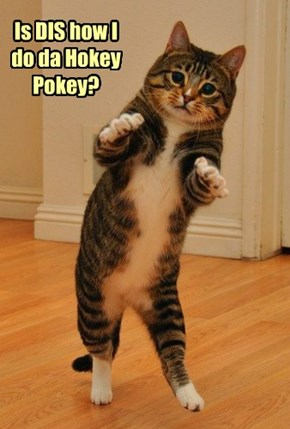 Is DIS how I do da Hokey Pokey?