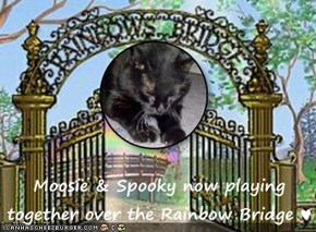 Moosie & Spooky now playing together over the Rainbow Bridge ♥