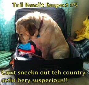 Tail Bandit Suspect #5   Cawt sneekn out teh country actin bery suspecious!!