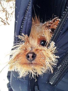 Puppy Does NOT Approve of Winter