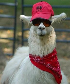 This Llama Has Style