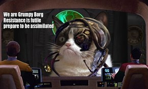 Grumpy Borg Cat Hates Resistance