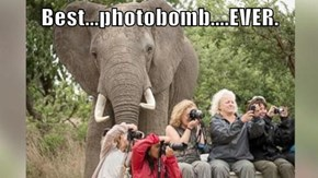 Best...photobomb....EVER.