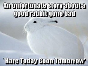 An unfortunate story about a good rabbit gone bad  'Hare Today Goon Tomorrow'