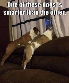 One of these dogs is smarter than the other.