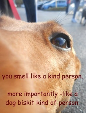 you smell like a kind person.  more importantly -like a dog biskit kind of person.