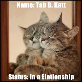 Name: Tab B. Katt  Status: In a Elationship