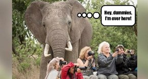 And They Say Elephants Have Bad Eyesight