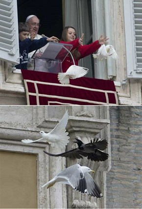 The Pope Releases Peace Doves, but Then Nature Takes its Course