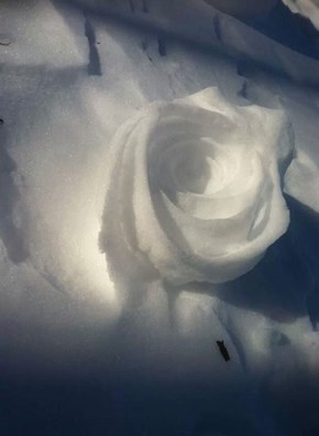 Wind Patters Created This Cool Snow Rose