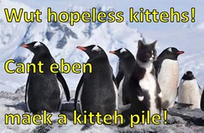 Wut hopeless kittehs! Cant eben maek a kitteh pile!