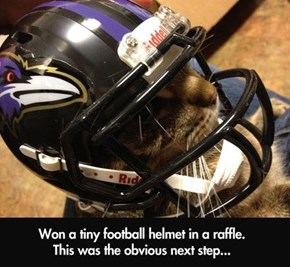 Are You Ready for Some Kitty Football?