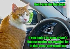 Cats Tell No Lies