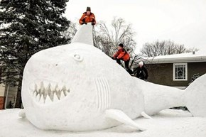 Snow Shark Fun