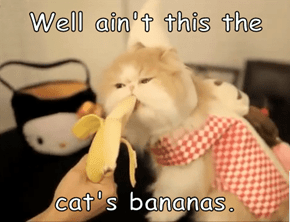 Well ain't this the  cat's bananas.