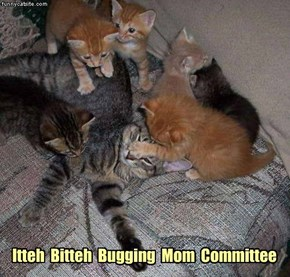 Itteh  Bitteh  Bugging  Mom  Committee